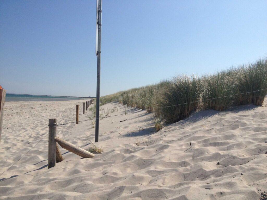 *der Strandkater Priemer GM 69667, * derStrandkat
