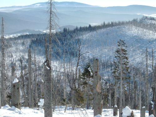 Winterwanderung zum Lusen