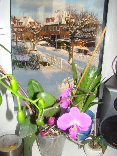 Fehlingstrasse im Winter 2009-10
