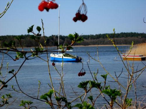 Frühlingsgerwachen am See