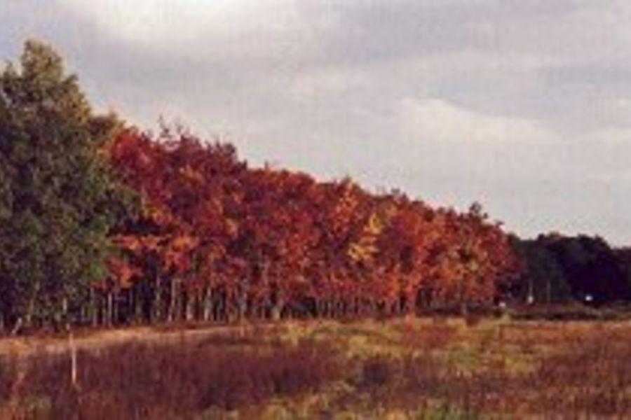 Wandern, Pilze sammeln in großen Wäldern