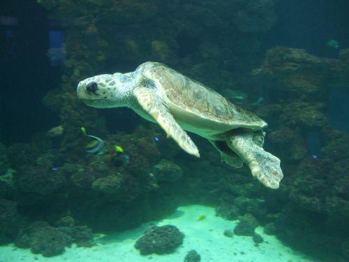 Schildkr�te im Meeresmuseum
