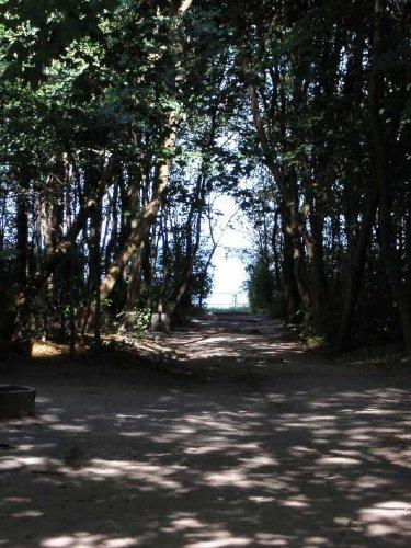 der kurze Waldweg zum Strand