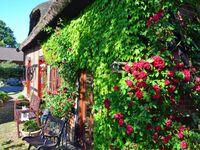 Appartement 'Bauernrose ' am Selliner - nahe der Ostsee, Appartement ' Bauernrose 'am Selliner See - in Sellin (Ostseebad) - kleines Detailbild