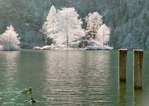 Am Königssee Blick a. Insel Christlieger