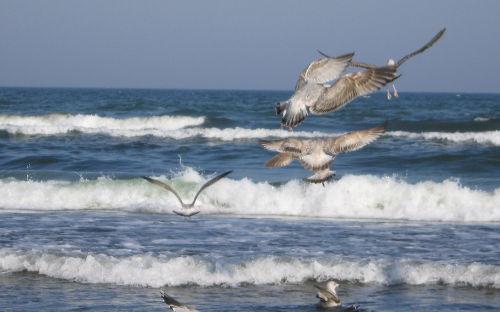 Möwen im Flug, direkt an unserem Strand