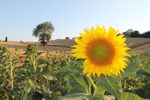 Landschaft um den Agriturismo Saletta