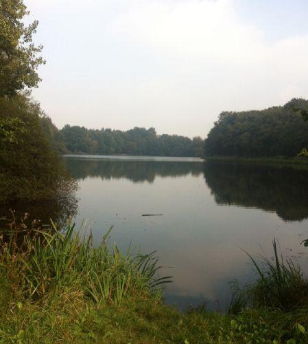 Spaziergang im Wald am Mühlenteich