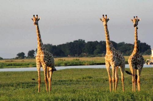 Safaripark Réserve Africaine