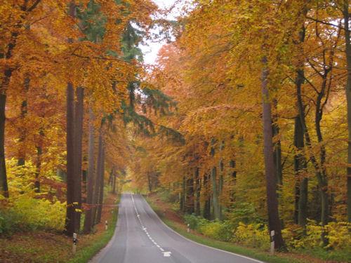 Herbstwald-L57-kurz vor Kasseedorf