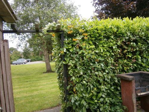 Gartent�r zur Wiese vorm Haus