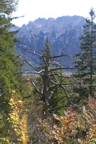 Blick vom Kranzberg zum Karwendel