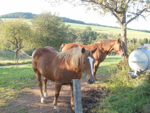 Ehem. Bauernhof mit Pferden und Schafen