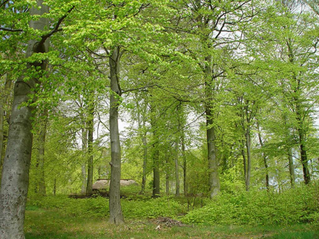 Wald-Residenz *****, Wohnung 4