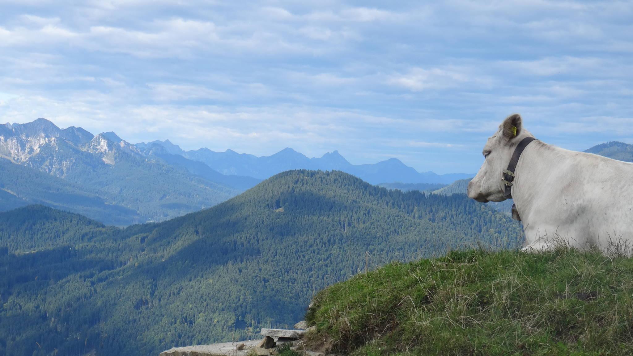 Blick ins Karwendel Gebirge