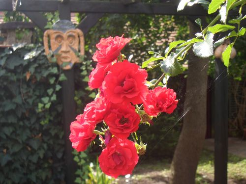 Rosen im August