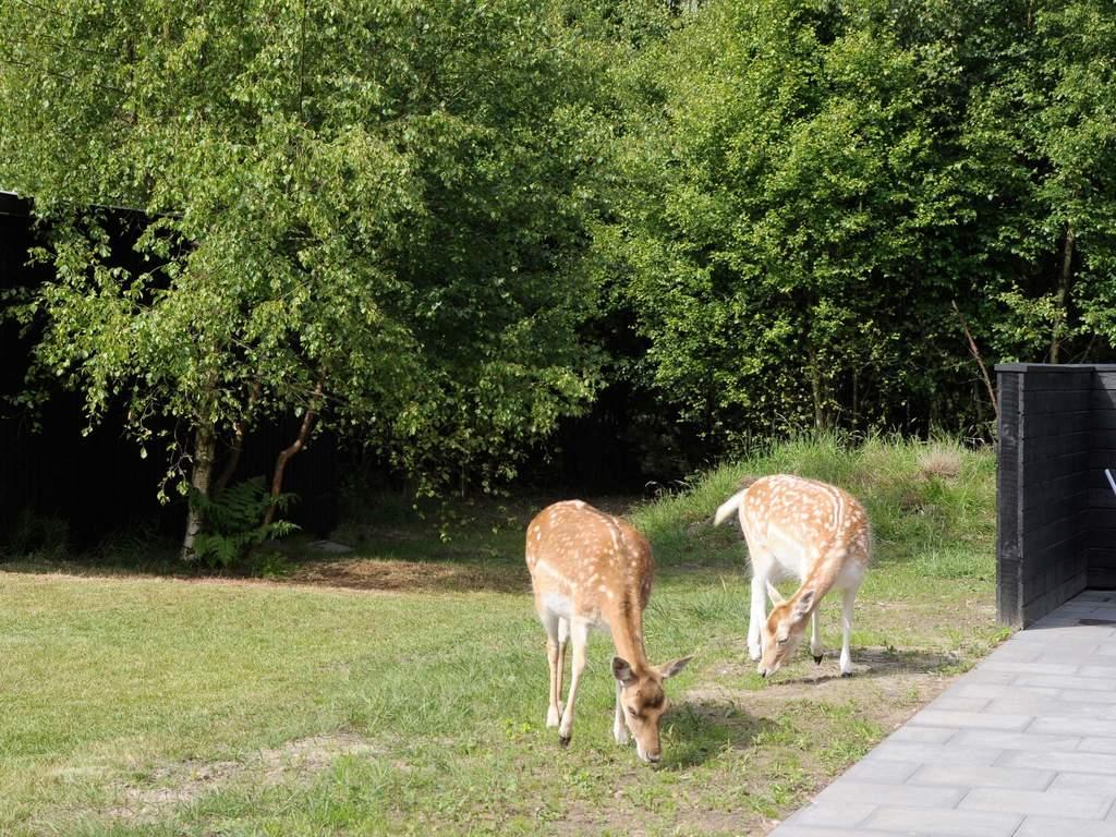 Umgebung von Ferienhaus No. 42750 in Bl�vand