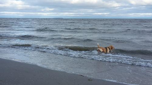 Urlaub mit Hund im Neuen Gutshaus