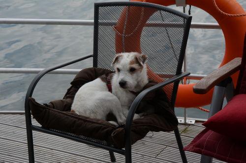 Hunde sind -nach R�cksprache- willkommen