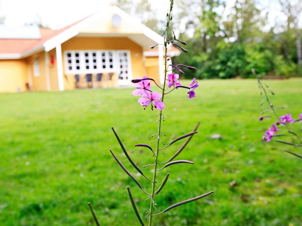 Umgebung von Ferienhaus No. 31996 in Oksbøl
