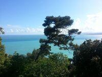Les Cypres vue mer in Nizza - kleines Detailbild