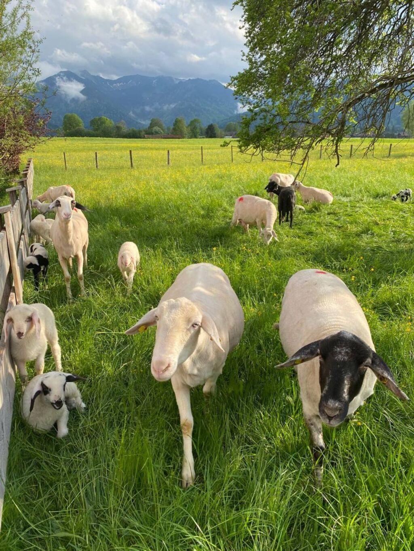 Zollner Priska, Breitenstein