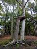 Ostseeidyll - Komfort Fewo nahe dem Rhododendronpa