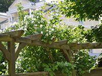 FeWo Schwalbennest in G�hren (Ostseebad) - kleines Detailbild