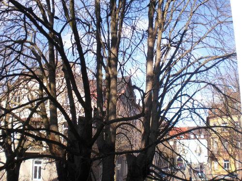 Blick zur Adlerstrasse