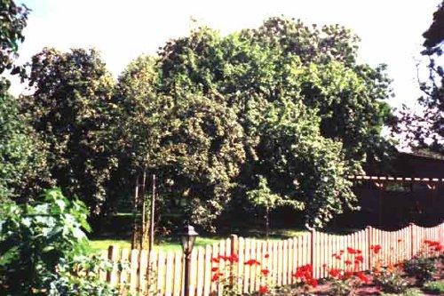 Der Garten der FeWo Jacob