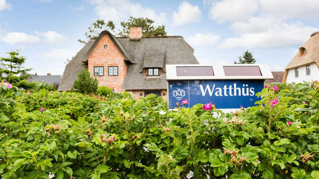'Watthüs Wenningstedt', 40-11 'Watthüs Wenningsted