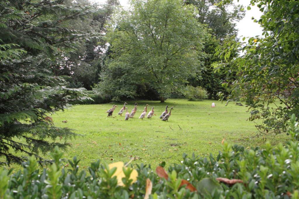 Ferienwohnungen in ländlicher Idylle nahe Schwerin