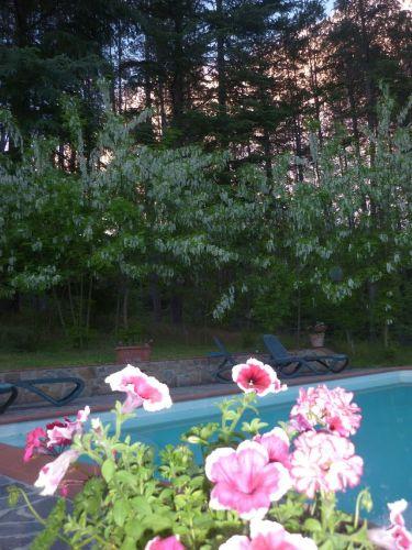 Frühlingsfarben am Pool