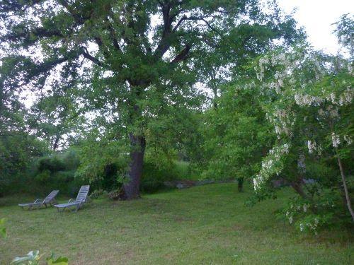 Unsere 100jährige Eiche im oberen Garten