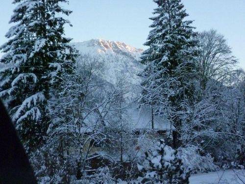 Garten vom Gästehaus Wolfgang