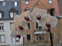 Mariahof, Ferienwohnung Mariahof in Freiburg - kleines Detailbild