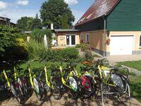 Familiäre Pension & Ferienwohnungen  'Lindenhof ', Weißstorch in Dargen OT Kachlin - kleines Detailbild