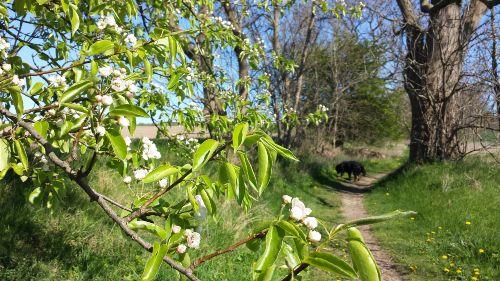 Wanderweg zwischen Lancken und Preetz