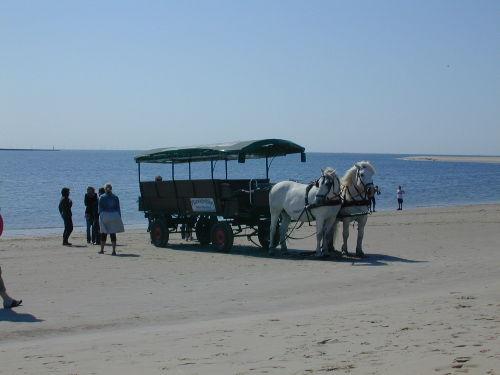 Inselrundfahrt mit Kutsche