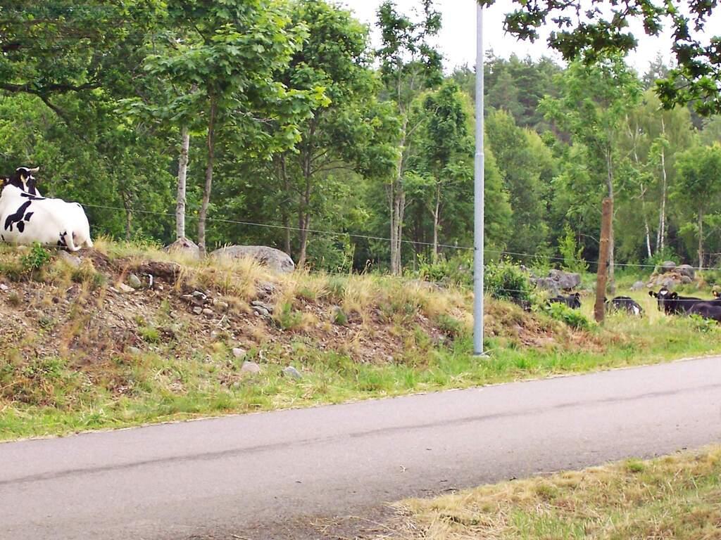 Umgebung von Ferienhaus No. 35199 in Alsterbro