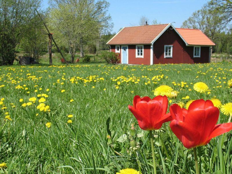 Detailbild von Ferienhaus No. 38196 in Älmhult
