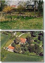 Hausstorch im Teich ; Luftbildaufnahme
