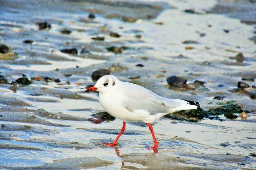 Vögel beobachten im Watt
