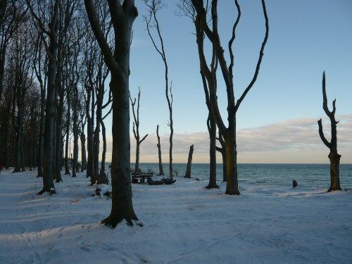 Winter am Gespensterwald / an der See