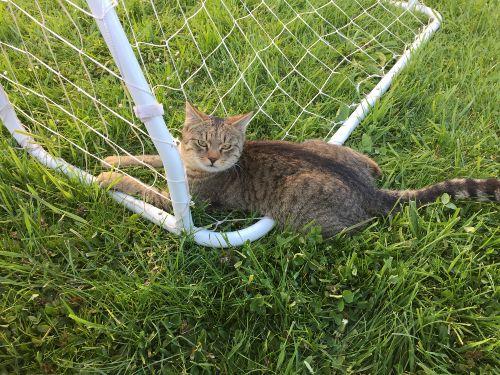 Zahme Katzen auf dem Hof