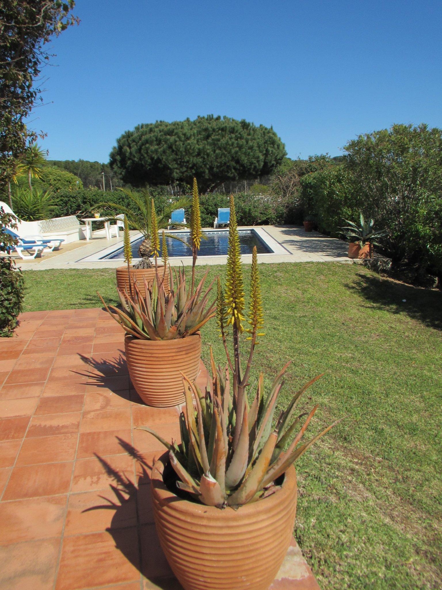 Aloe vera mit gelben Bl�ten