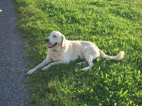 Peter unser Hofhund und treuer Begleiter