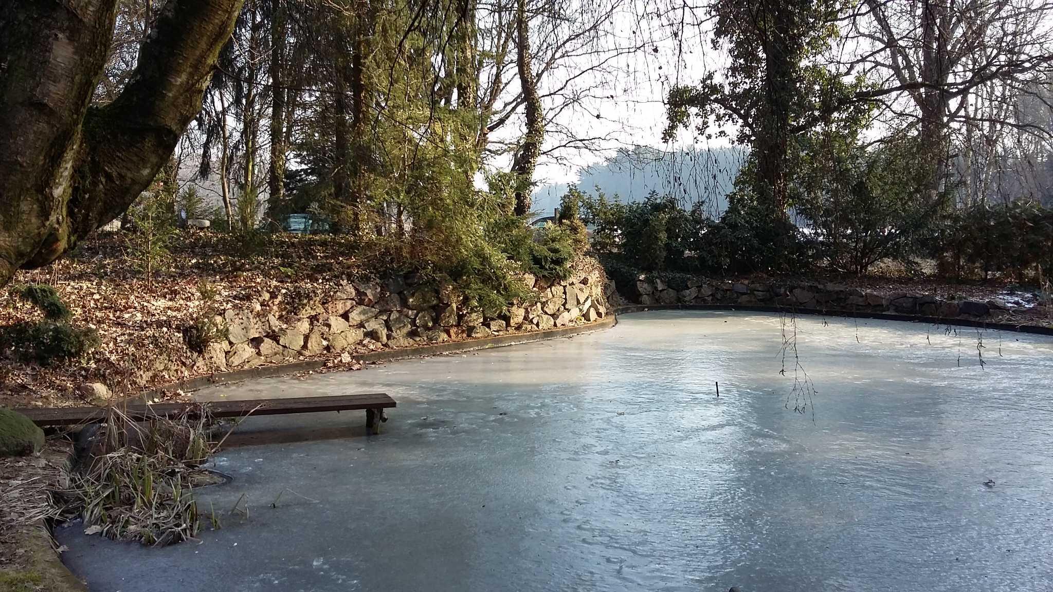 Eiszeit am Teich
