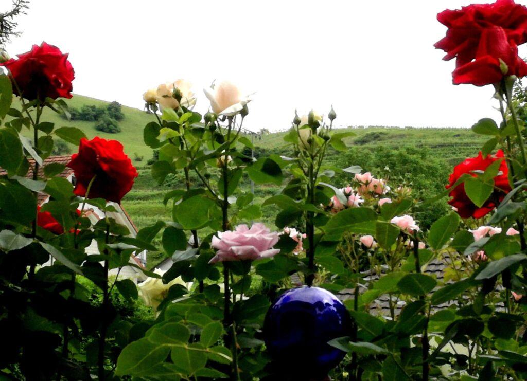 G�stehaus Rul�nder, Ferienwohnung mit Dusche-WC, 6