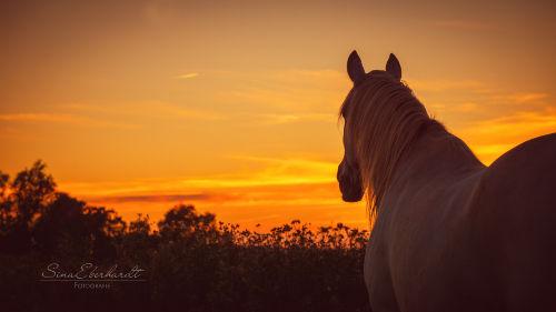 Abendstimmung auf der Pferdeweide